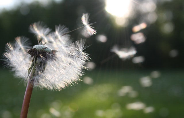 Hay fever, Kenalog and COVID-19: Why this summer is different